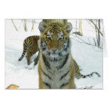 Tiger Cub In Snow Portrait Cards