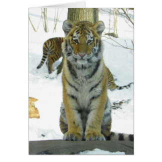Tiger Cub In Snow Portrait Greeting Card