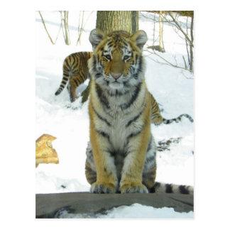 Tiger Cub In Snow Portrait Postcard