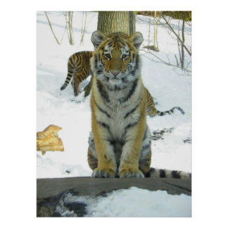 Tiger Cub In Snow Portrait Poster