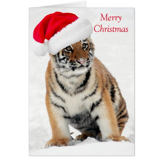 Tiger cub in snow red hat Christmas holiday