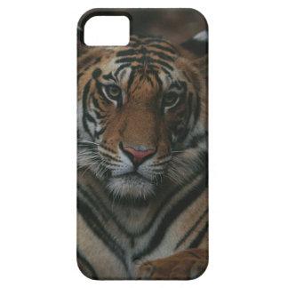 Tiger Cub iPhone 5 Cases