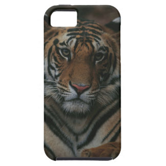 Tiger Cub iPhone 5 Covers