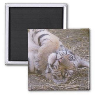Tiger cub magnet