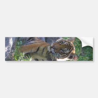Tiger Cub Portrait Bumper Sticker