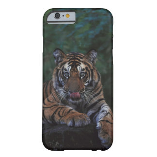 Tiger Cub Reclines on Rock Barely There iPhone 6 Case