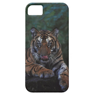 Tiger Cub Reclines on Rock iPhone 5 Cover