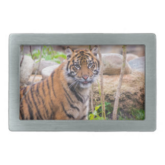 Tiger cub rectangular belt buckle
