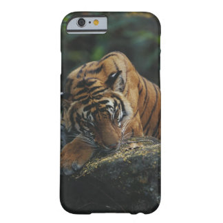 Tiger Cub Sleeps on Rock Barely There iPhone 6 Case
