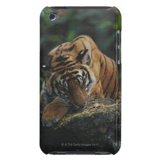 Tiger Cub Sleeps on Rock iPod Touch Cover