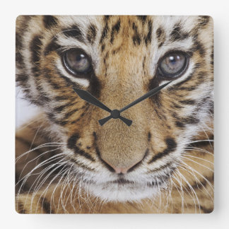 Tiger Cub Square Wall Clock