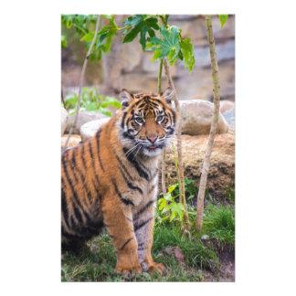 Tiger cub stationery