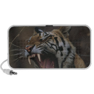 Tiger Cub Yawning iPhone Speakers
