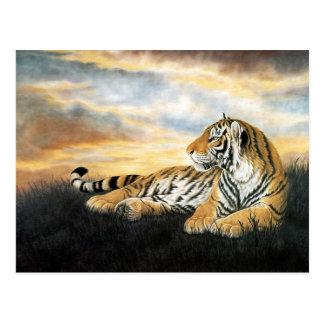 Tiger Dawn Postcard