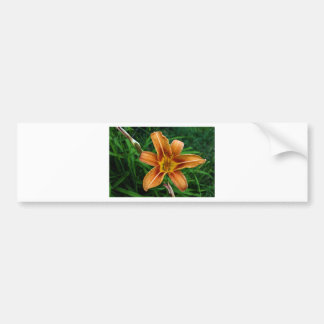 Tiger Day Lily Bumper Sticker