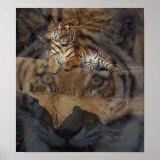 Tiger Doubletake Poster