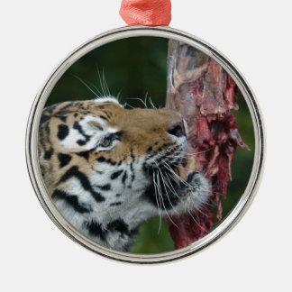 Tiger eating christmas ornament