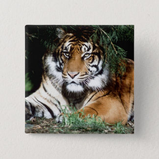 Tiger Enjoying Shade 15 Cm Square Badge