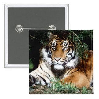 Tiger Enjoying Shade 15 Cm Square Badge