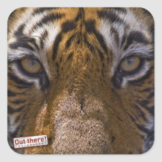 Tiger eyes square sticker