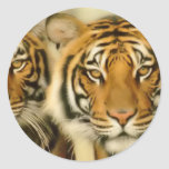 Tiger Eyes Sticker