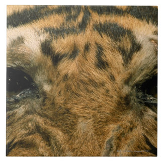Tiger eyes tile