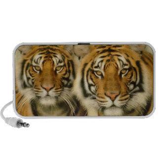 Tiger Eyes Travelling Speaker