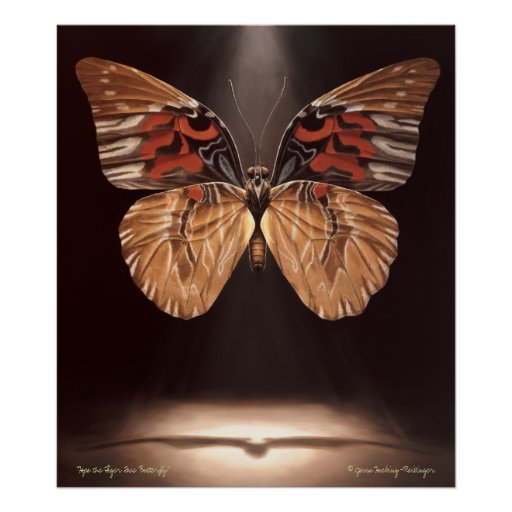 Tiger Face Butterfly Poster