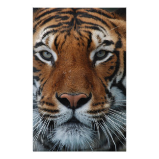 Tiger Face Customised Stationery