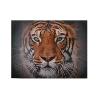 Tiger Face Eyes Stunning Big Cat Wood Poster