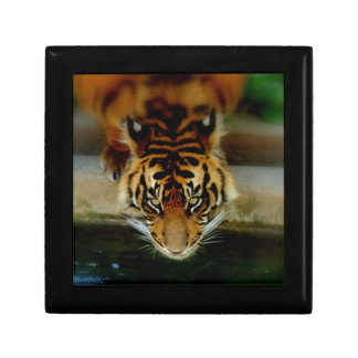 Tiger Face Gift Box