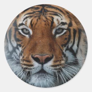 Tiger Face Round Sticker