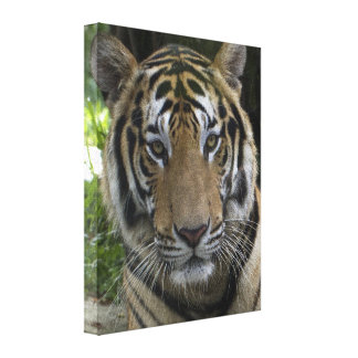 Tiger Face Wrapped Canvas