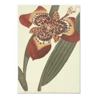 Tiger Flower Botanical Illustration Card