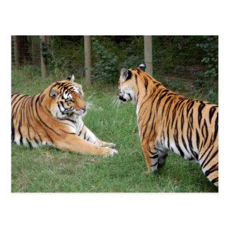 Tiger Friends-002 Postcard