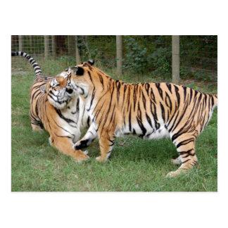 Tiger Friends-004 Postcards