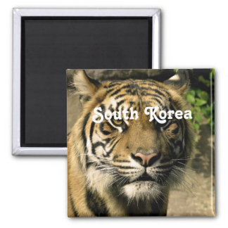 Tiger from South Korea Fridge Magnets