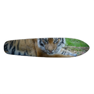 Tiger Gaze Skateboards