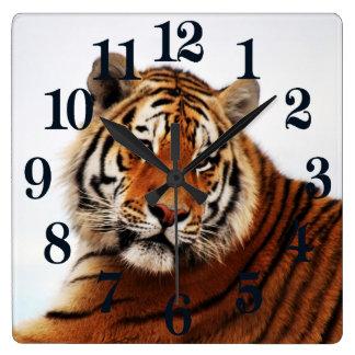 Tiger glance sideways photo square wall clock