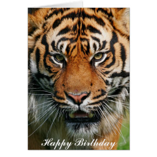 Tiger - Happy Birthday Greeting Card