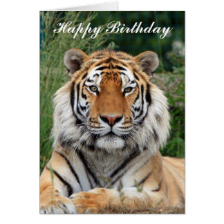 Tiger head beautiful photo happy birthday card