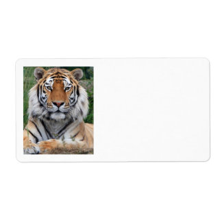 Tiger head beautiful photo portrait address labels