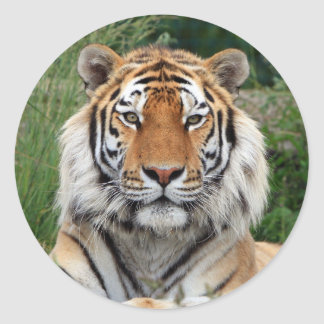 Tiger head beautiful photo sticker, stickers