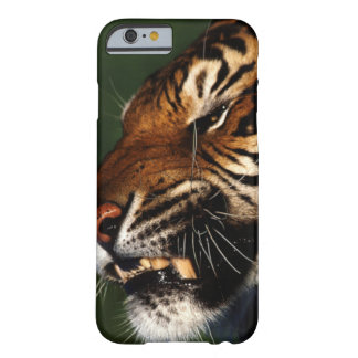 Tiger Head Close Up Barely There iPhone 6 Case