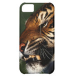 Tiger Head Close Up Cover For iPhone 5C