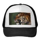 Tiger Head Close Up Hat