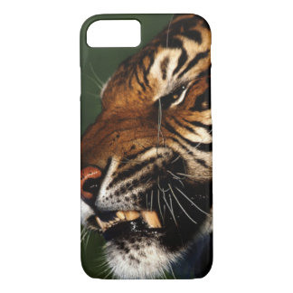 Tiger Head Close Up iPhone 8/7 Case