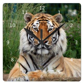 Tiger head male beautiful photo portrait square wall clock
