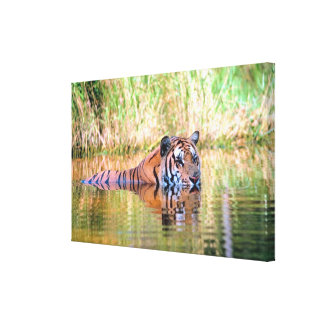 Tiger in lake canvas print