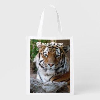 Tiger in Myanmar